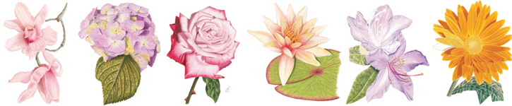 Learn step by step how to sketch roses