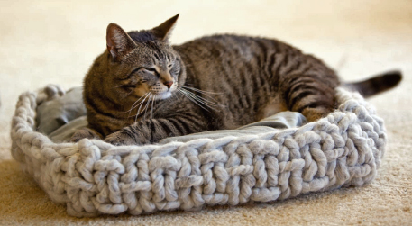 Cat Knitting Patterns: 40 Winks Basket from Interweave Knits Weekend 2009