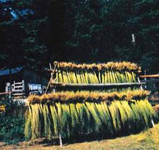 flax-linen