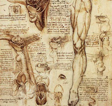 human-anatomy-for-artists
